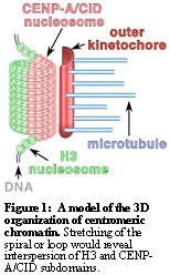 The histone demethylase dKDM5/LID interacts with the SIN3 ...
