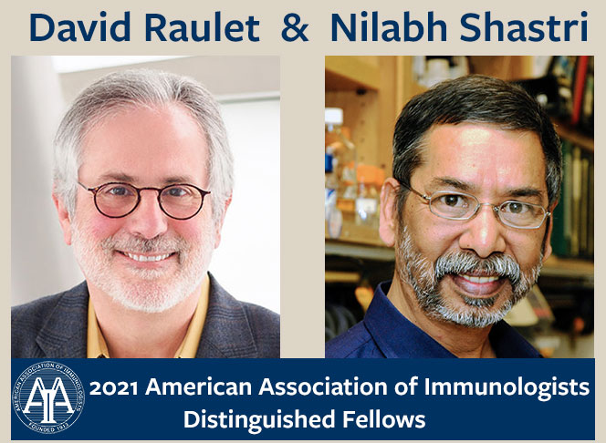 Raulet and Shastri 2021 AAI Distinguished Fellows